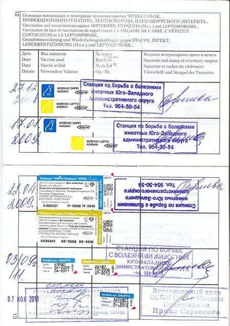 Отметки о прививках в паспорте